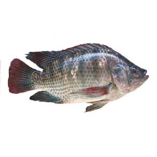 weee_seafood_Great American 真空包装整条罗非鱼 (已去鳃去鳞) 4 磅